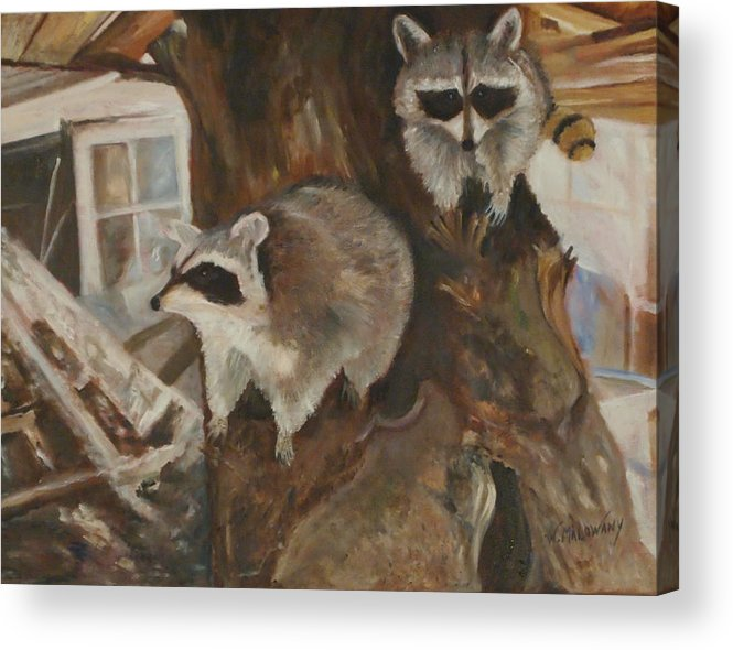 Raccoon Acrylic Print featuring the painting Bandit Sisters by Wendy Malowany