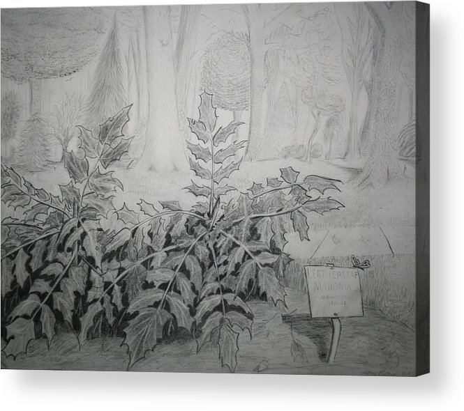 Drawing Acrylic Print featuring the drawing Bernheim Forest Plant by Stacy C Bottoms