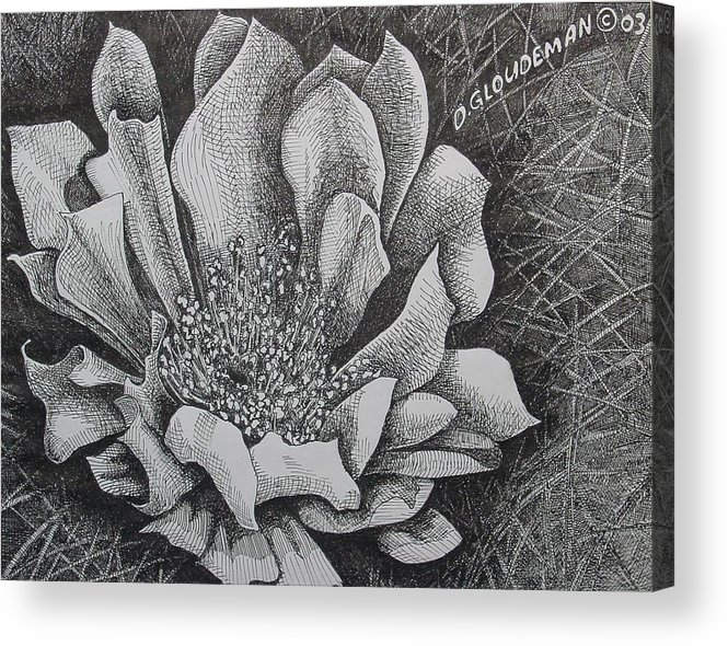 Flowers Acrylic Print featuring the drawing Cactus Flower by Denis Gloudeman
