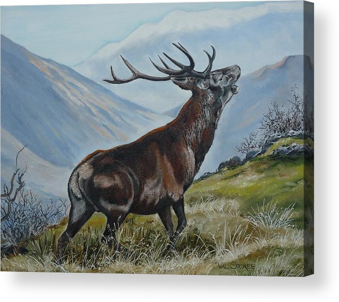 Deer Acrylic Print featuring the painting Deer Country by Val Stokes