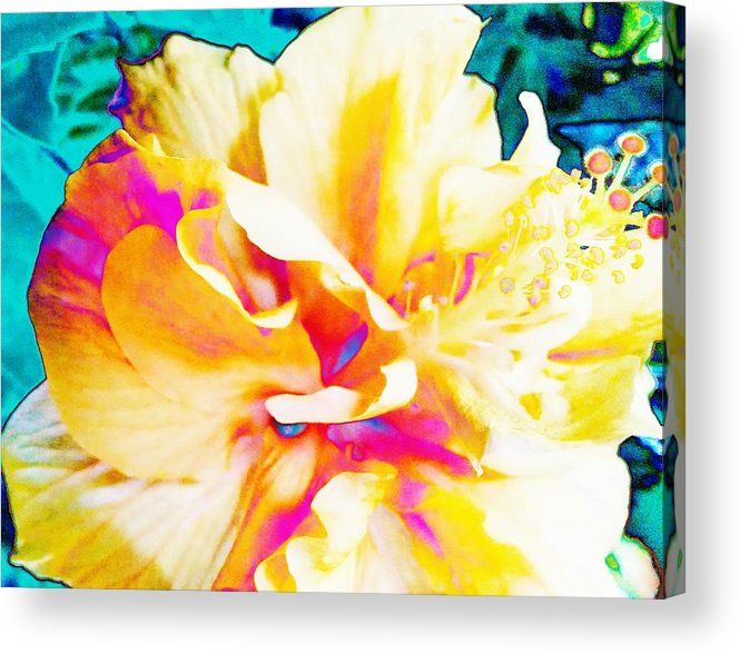 Bright Acrylic Print featuring the photograph In Color by Debra Wynn