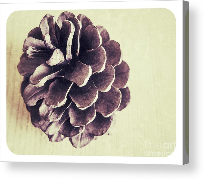 Autumn Acrylic Print featuring the photograph Pinecone by Steve Outram