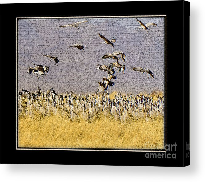 Bird Acrylic Print featuring the photograph Sandhill Cranes On The Ground by Larry White