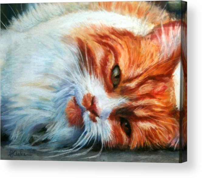 Cat Acrylic Print featuring the painting Cat Nap by PJ Acker