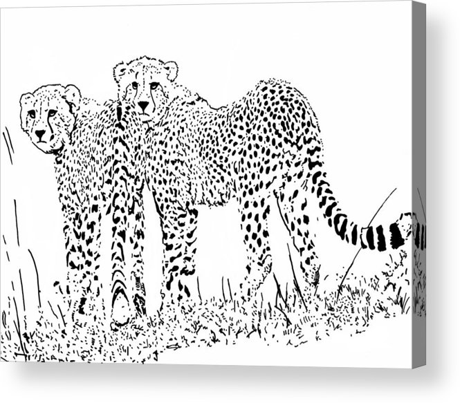 Cheetah Acrylic Print featuring the drawing Catch Me If You Can.. by Lori Jackson