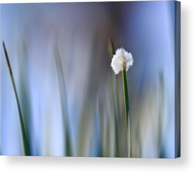 Feather Palm Acrylic Print featuring the photograph Feather On The Palm by Amy Salter