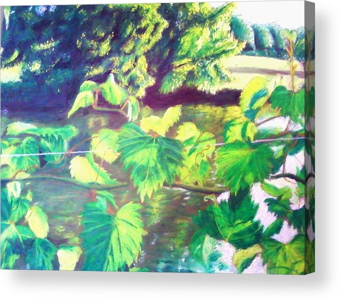 Botanical Acrylic Print featuring the painting Grapevines Toledo Botanical Gardens by Samuel McMullen