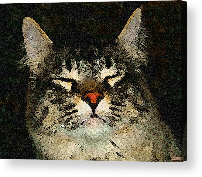 Cat Acrylic Print featuring the photograph Jeff Fray by Paula Greenlee