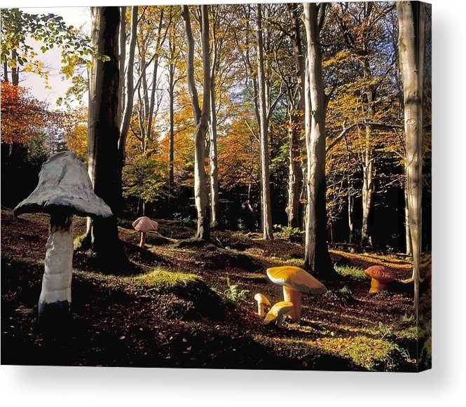 Color Image Acrylic Print featuring the photograph Mushrooms In A Forest by The Irish Image Collection