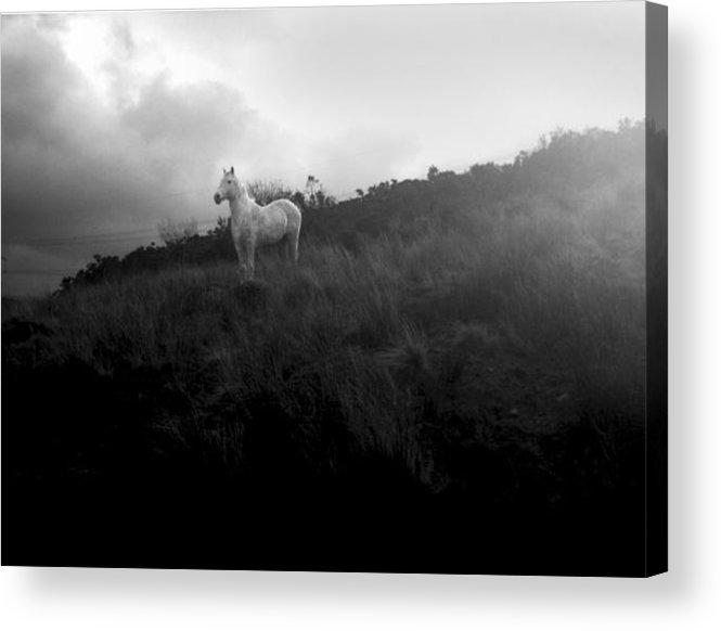 Horse Acrylic Print featuring the photograph Mystic Horse by Gareth Tanner