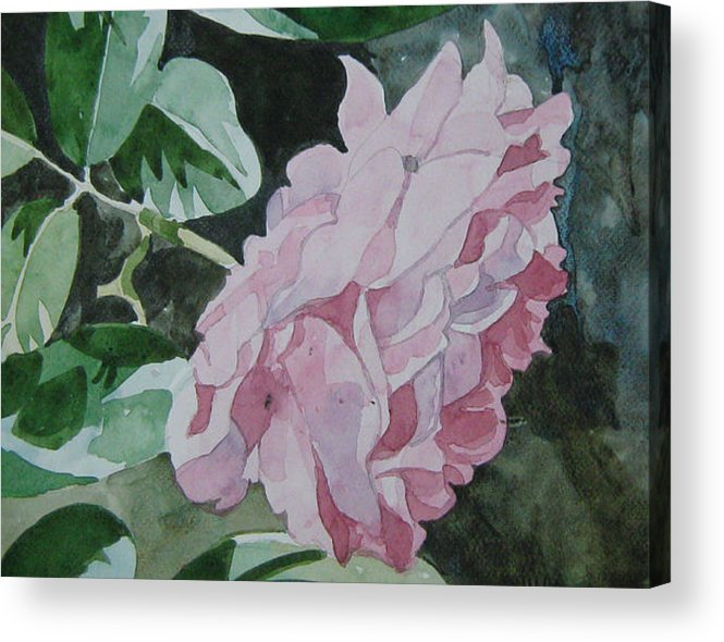 Rose Acrylic Print featuring the painting Still Cool by Akhilkrishna Jayanth