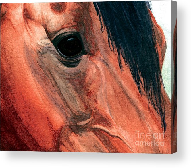 Horse Acrylic Print featuring the painting Through My Eyes by Tonia Antilla