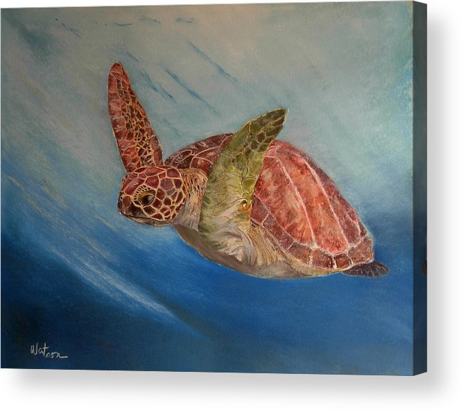 Green Trutle Acrylic Print featuring the painting Flying Underwater by Ceci Watson