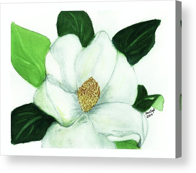 Magnolias Acrylic Print featuring the painting Magnolia II by Joan Zepf