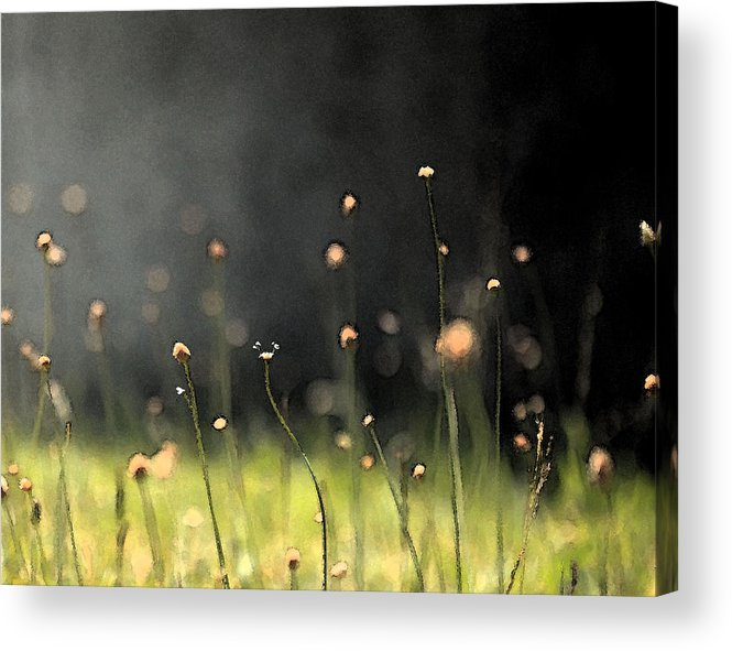 Flower Acrylic Print featuring the photograph All Souls 2 by Amy Neal