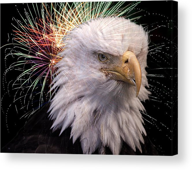 Bald Eagle Acrylic Print featuring the photograph American Eagle by Steve Seeger