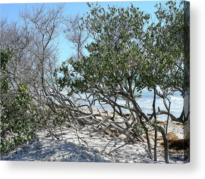 Landscape Acrylic Print featuring the photograph Beach Brush by Peter McIntosh