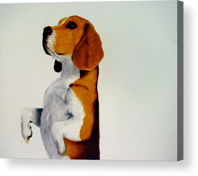 Beagle Acrylic Print featuring the painting Beagle by Dick Larsen