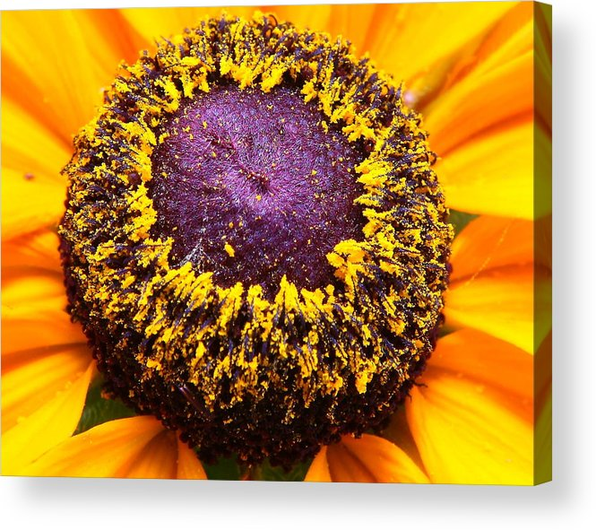 Nature Acrylic Print featuring the photograph Black-eyed Center by Larry Federman