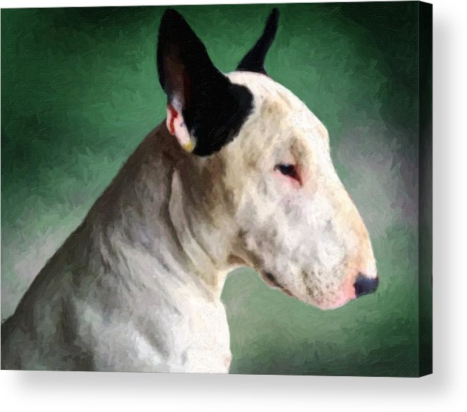 English Bull Terrier Acrylic Print featuring the painting Bull Terrier On Green by Michael Tompsett