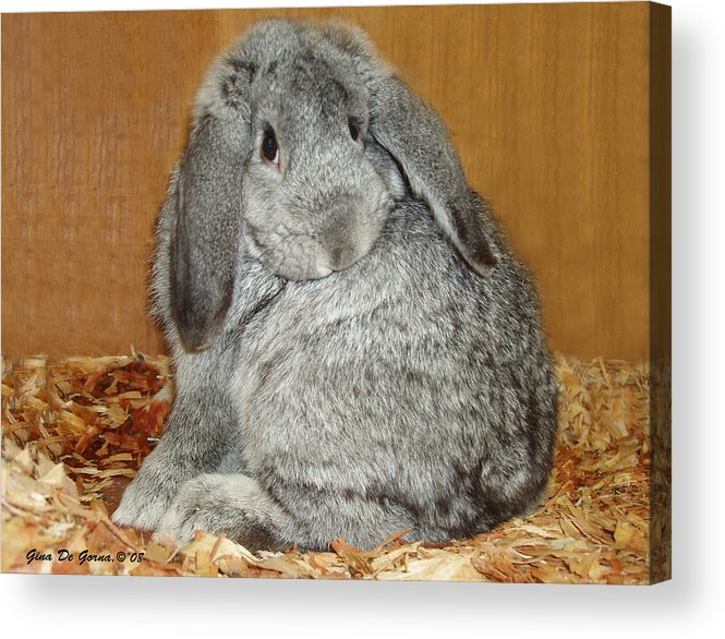 Bunny Acrylic Print featuring the photograph Bunny by Gina De Gorna