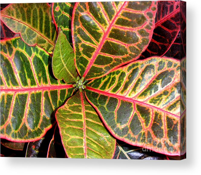 Nature Acrylic Print featuring the photograph Croton - A Center View by Lucyna A M Green