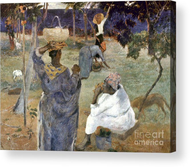 1887 Acrylic Print featuring the photograph Gauguin: Martinique, 1887 by Granger