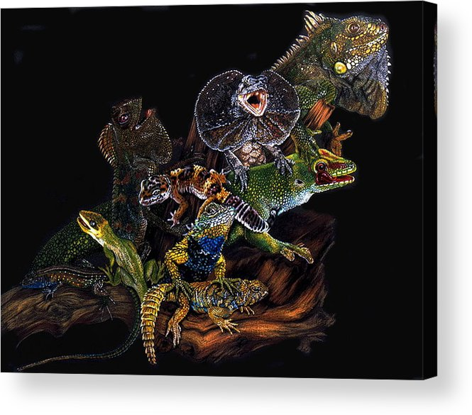 Lizards Acrylic Print featuring the drawing Gems And Jewels by Barbara Keith