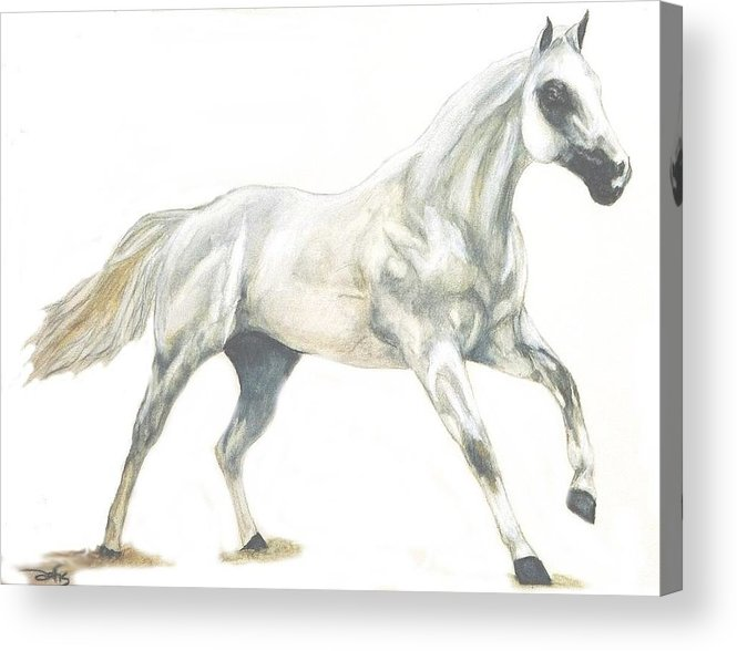 White Horse Acrylic Print featuring the painting Ghost Horse by Debra Sandstrom