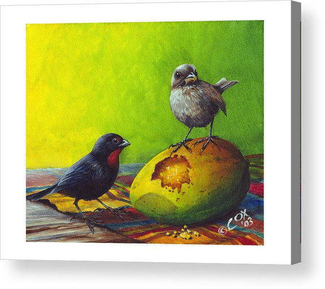 Chris Cox Acrylic Print featuring the painting Lesser Antillean Bullfinches And Mango by Christopher Cox