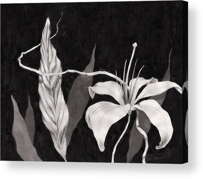 Ink Painting Acrylic Print featuring the drawing Lily In The Night by Jennifer McDuffie