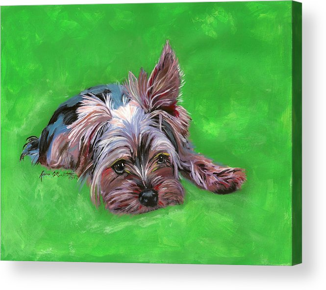 Yorkie Acrylic Print featuring the painting Merle by Renee Catherine Wittmann