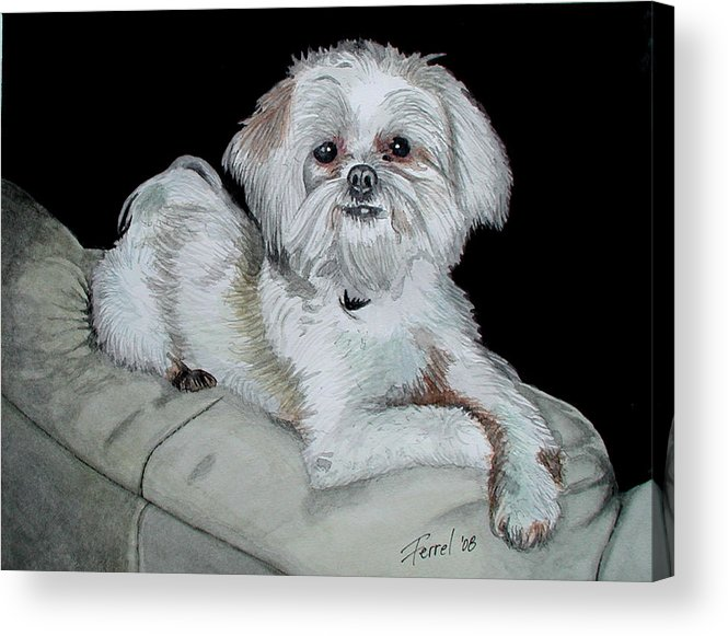 Dog Acrylic Print featuring the painting Miki Dog by Ferrel Cordle