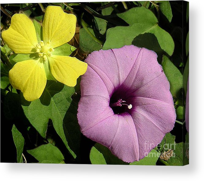 Nature Acrylic Print featuring the photograph Nature In The Wild - The Odd Couple by Lucyna A M Green
