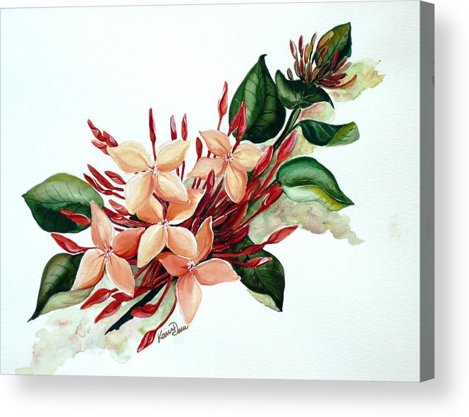 Floral Peach Flower Watercolor Ixora Botanical Bloom Acrylic Print featuring the painting Peachy Ixora by Karin Dawn Kelshall- Best