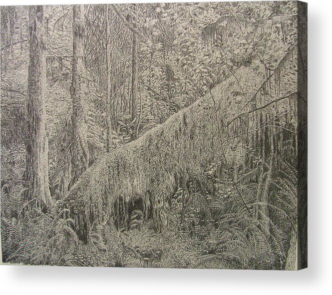 Rain Forest Acrylic Print featuring the drawing Rain Forest by Dan Hausel