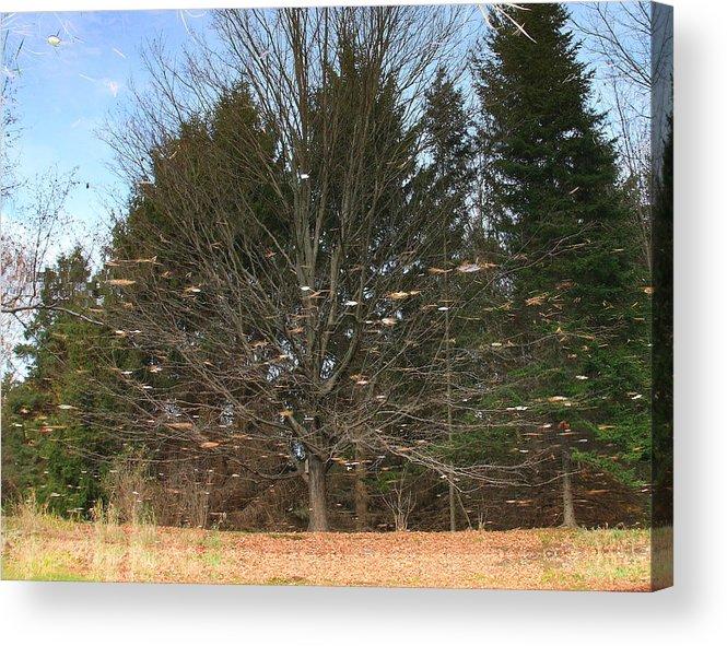 Landscape Acrylic Print featuring the photograph Reflective Landscape by Larry Federman