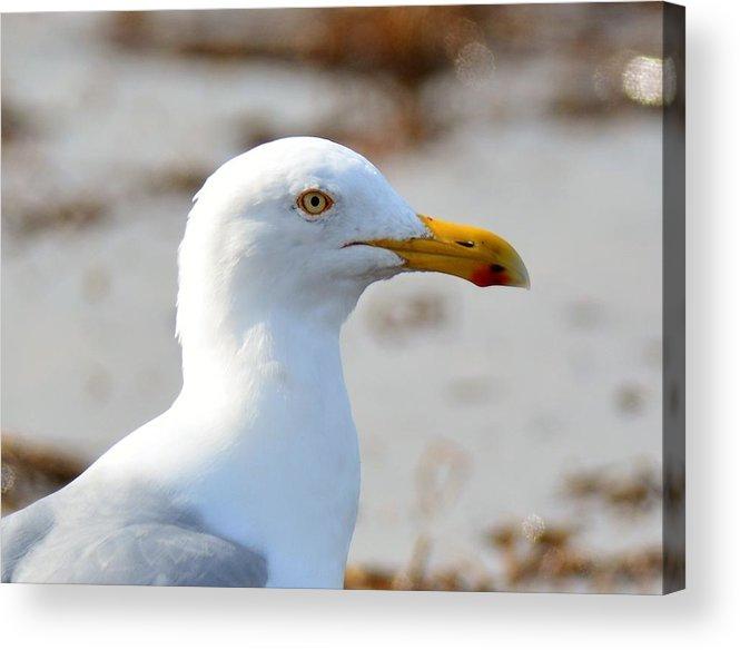 Sea Gull Acrylic Print featuring the photograph Sea Gull by Jo-Ann Matthews