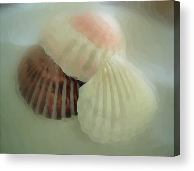 Sea Shells Acrylic Print featuring the photograph Sea Shells From The Sea Shore by Dottie Dees