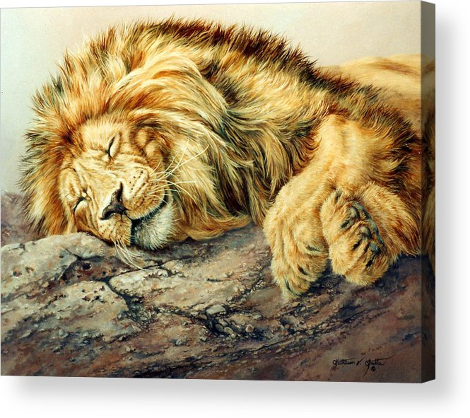 Lion Portrait Acrylic Print featuring the painting Sleeping Lion by Kathleen V Butts