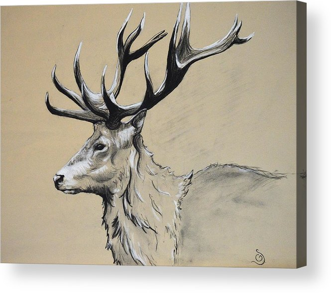 Stag Acrylic Print featuring the drawing Stag by GD Swenson