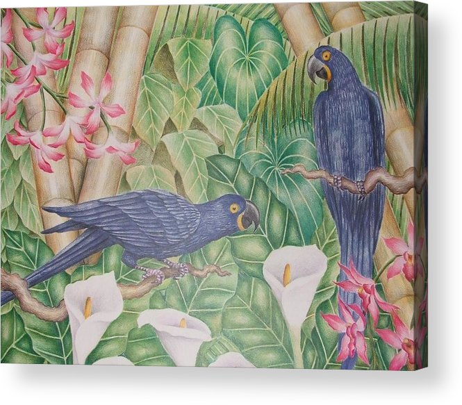 Tropical Landscape Flower Bird Acrylic Print featuring the drawing Two Macaws by Jubamo