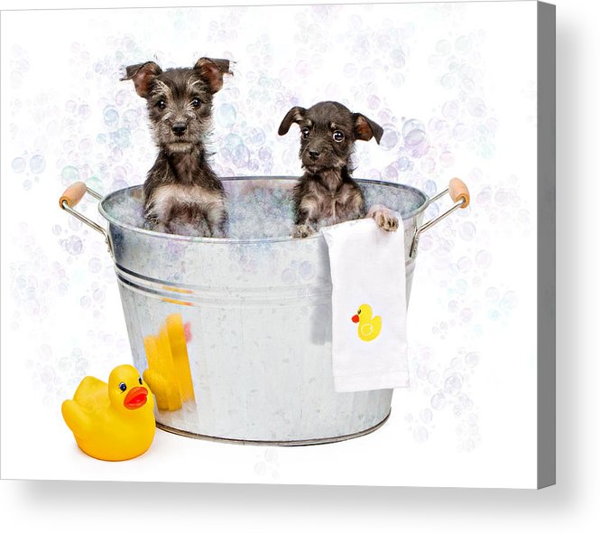 Dog Acrylic Print featuring the photograph Two Scruffy Puppies In A Tub by Susan Schmitz