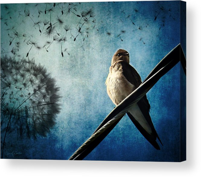 Swallow Acrylic Print featuring the photograph Wishing Swallow by Nancy Coelho