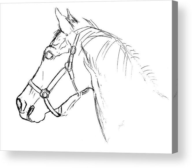 Horse Acrylic Print featuring the photograph Yearling White by JAMART Photography