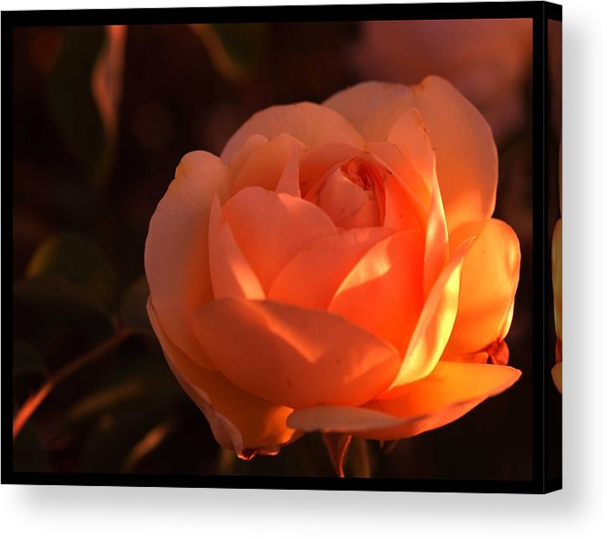Flowers Acrylic Print featuring the photograph Warm Sun by Richard Gordon