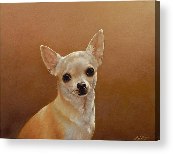 Chihuahua Acrylic Print featuring the painting Chihuahua I by John Silver