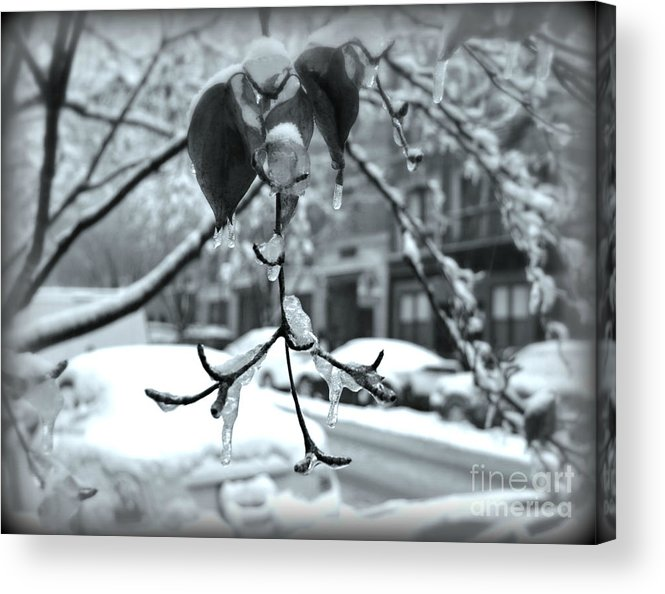 Ice Acrylic Print featuring the photograph Coat Of Ice - Winter In New York by Miriam Danar