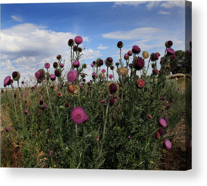 Thorny Flowers Acrylic Print featuring the photograph Desert Colors by Joseph G Holland