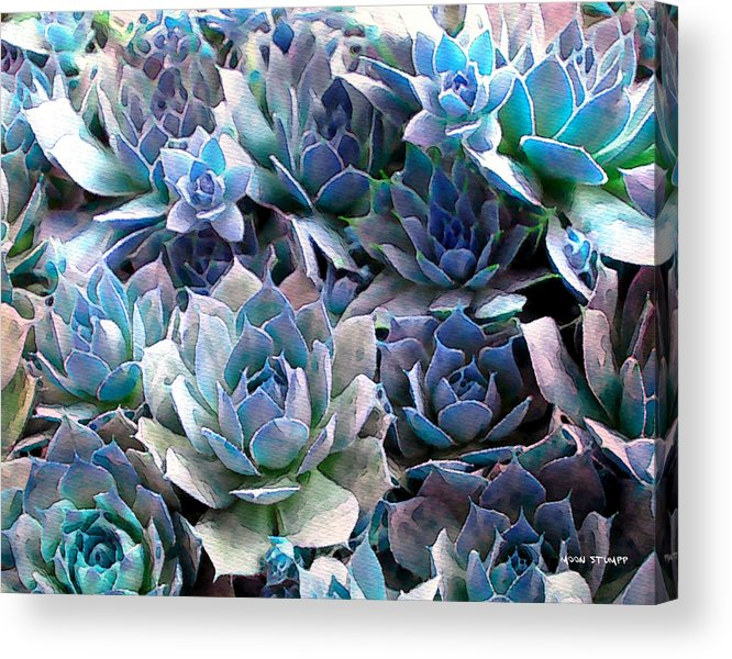 Hens And Chicks Photography Acrylic Print featuring the photograph Hens And Chicks Series - Evening Light by Moon Stumpp